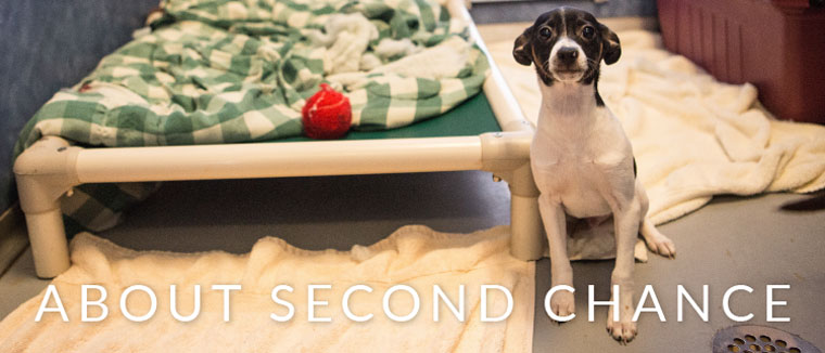 Second Chance Humane Society Ridgway Colorado